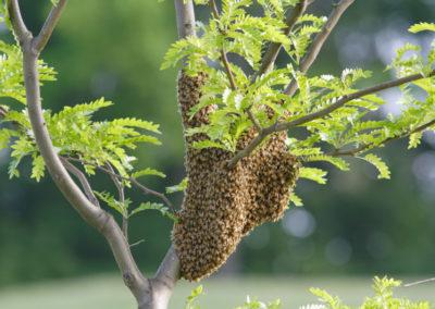 A tree swarm
