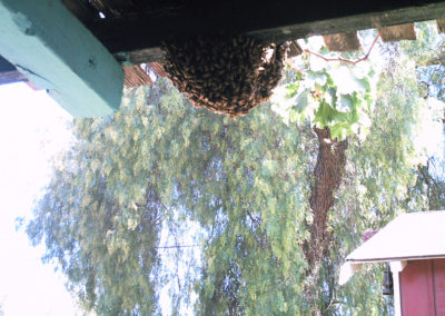 A swarm of bees under a roof