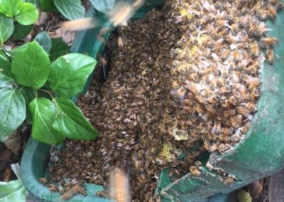Bee and honey removal from irrigation box