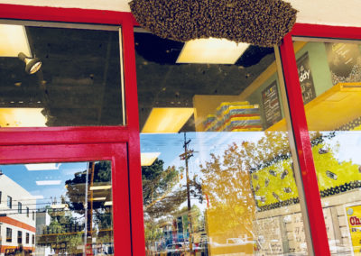 A Swarm of bees on a building entrance
